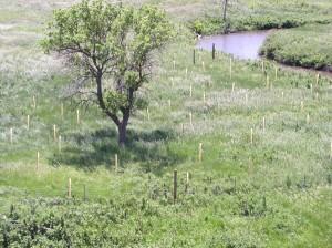 cottonwood-project